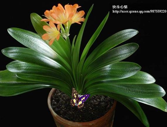 18种常见室内植物的功效 - 丑女无敌 - 丑女无敌